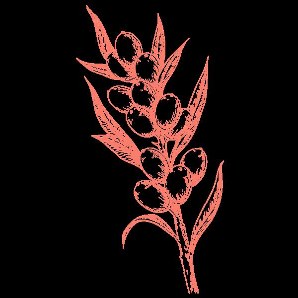 Rokitnik Ałtajski
